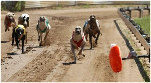 This is How to Win More in the Greyhound Races